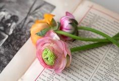 Trois fleurs Photos stock