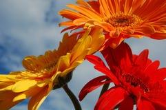 Trois fleurs image libre de droits