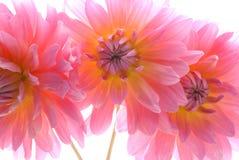 Trois fleurs   Photo libre de droits