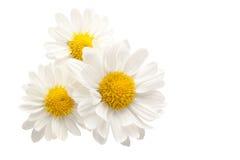 Trois fleurs d'isolement Images stock