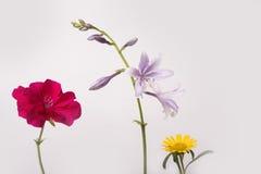 Trois fleurs d'isolement de pré sur le fond blanc Image stock
