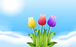 Trois fleurs de floraison sous la lumière du soleil Image stock