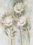 Trois fleurs de protea photos stock
