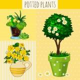 Trois fleurs différentes dans des pots Images libres de droits