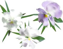 Trois fleurs légères de violette de jardin d'isolement sur le blanc image libre de droits