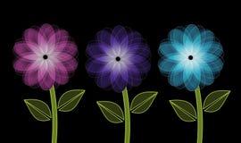 Trois fleurs lumineuses sur le fond noir Images stock