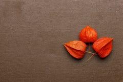 Trois fleurs sèches sur le livre Image libre de droits