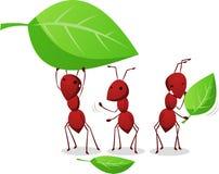 Trois fourmis travaillant et portant des feuilles à la fourmilière Image stock