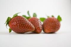 Trois fraises Photographie stock libre de droits