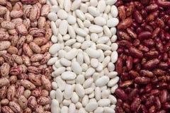 Trois genres d'haricots nains Image libre de droits