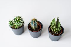 Trois genres de cactus verts sur un fond gris r images libres de droits