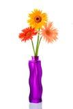 Trois gerberas dans un vase à fleur Image libre de droits