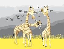 Trois girafes dans la savane de l'Afrique Photos libres de droits