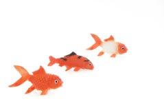 Trois goldfishes Photographie stock libre de droits