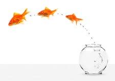 Trois goldfishes s'échappant du fishbowl photographie stock