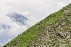 Trois gotas de montagne à la pente alpine Photos libres de droits