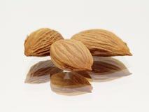 Trois graines d'abricot Photographie stock