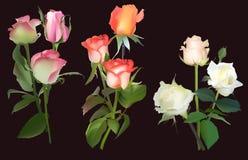 Trois groupes de rose de couleur d'isolement sur le noir Photos stock