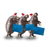 Trois hippopotames allant au supermarché Photographie stock libre de droits