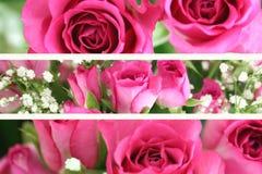 Trois images roses d'horizontal de Rose Images libres de droits