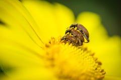 Trois insectes manifestant leur saison spécifique Photos stock