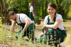 Trois jardiniers au travail image stock