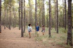 Trois jeunes amis explorant les bois Photographie stock