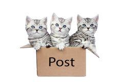 Trois jeunes chats dans la boîte en carton avec le courrier de mot Image stock