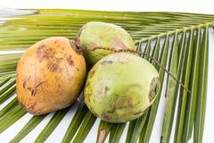 Trois jeunes et noix de coco verte organique juteuse sur la palmette Photos libres de droits