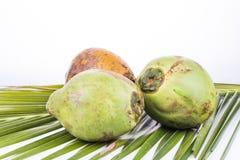 Trois jeunes et noix de coco verte organique juteuse sur la palmette Image stock