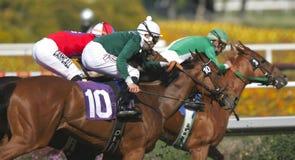 Trois jockeys et chevaux de emballage Images libres de droits