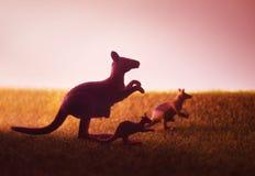 Trois kangourous sur le pré sur le coucher du soleil images libres de droits