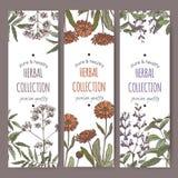 Trois labels de tisane de vecteur de couleur avec la valériane, calendula, sauge Photographie stock