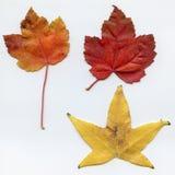 Trois lames d'automne Photo libre de droits