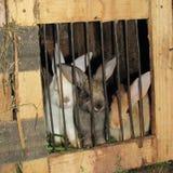 Trois lapins multicolores de frères louchent d'un Soleil Levant Photographie stock libre de droits