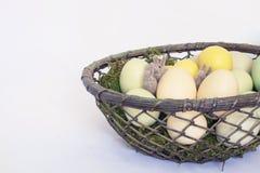 Trois lapins ou lapins minuscules de Felted se cachent dans le panier de Pale Colo Image stock