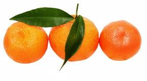 Trois mandarines Image stock