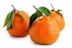 Trois mandarines entières avec des feuilles image libre de droits