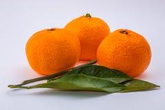 Trois mandarines sur le fond blanc Photographie stock