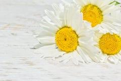 Trois marguerites sur un fond en bois blanc Image stock