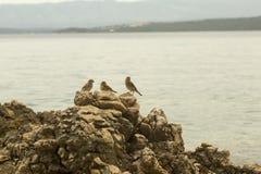 Trois moineaux sur la roche Photos libres de droits