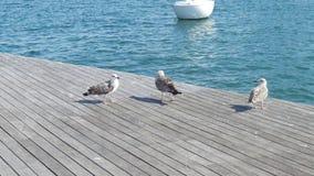 Trois mouettes près de l'eau bleue et d'un bateau dans la distance Images libres de droits