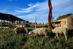 Trois moutons sous un ciel lumineux image stock