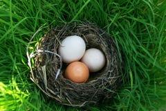 Trois oeufs d'oiseau de différentes couleurs se situent dans le nid sur l'ivrogne photographie stock