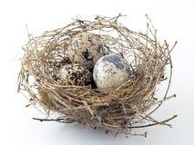 Trois oeufs dans le nid d'oiseaux Photographie stock