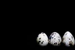 Trois oeufs de caille sur un fond noir Photo libre de droits