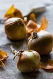 Trois oignons sur un fond hessois avec la peau d'oignon dispersée Photo libre de droits