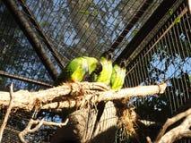 Trois oiseaux Image libre de droits