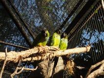 Trois oiseaux Images stock