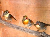 Trois oiseaux Photos stock